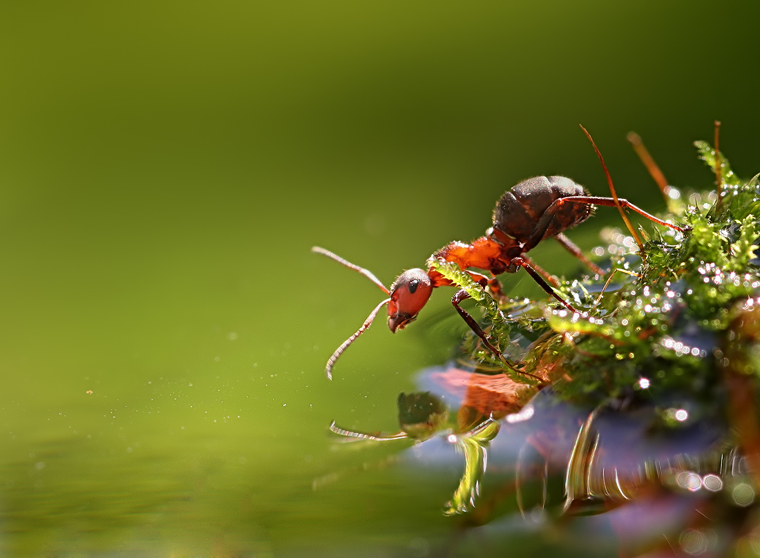 These macro photos by Vadim Trunov are awesome. The first two photos ...