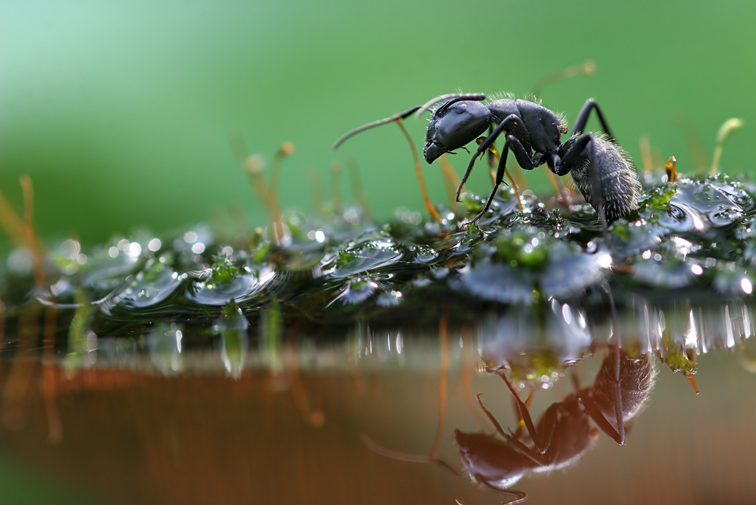 Macro Photography By Vadim Trunov | Shelby White - The ...